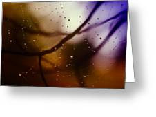 Web With Droplets Greeting Card