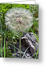 Weed In Waiting Greeting Card