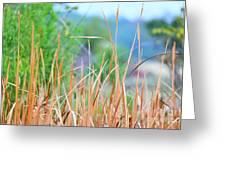 Weeds 033 Greeting Card
