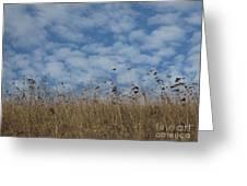 Weeds And Dappled Sky Greeting Card