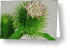 Weeds Can Be Beautiful Too Greeting Card