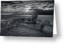 Weeds In The Sunrise Greeting Card