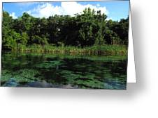 Weeki Wachee River Greeting Card