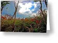 Weeks Bay Swamp Greeting Card