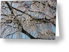 Weeping Cherry In Spring Greeting Card