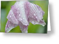 Weeping Lily Greeting Card