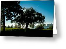 Weeping Willow Silhouette Greeting Card