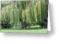 Weeping willow tree photograph by angela koehler weeping willow tree greeting card m4hsunfo