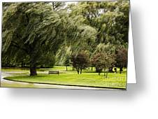 Weeping Willow Trees On Windy Day Greeting Card