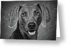 Weimaraner In Black And White Greeting Card