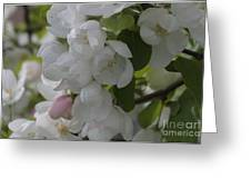 Welcome Spring Greeting Card