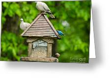 Welcome To My Bird Feeder Greeting Card