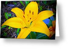 Welcoming Lily Greeting Card