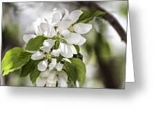 Welcoming Spring Greeting Card