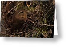 Well Hidden Nest Greeting Card