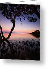 Wellington Point Sunset Greeting Card