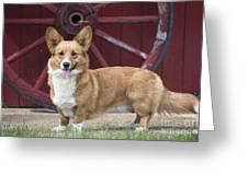Welsh Pembroke Corgi Dog Outdoors Greeting Card