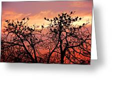 Wente Road Sunset Greeting Card