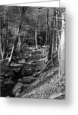 Wesser Creek Trail Greeting Card