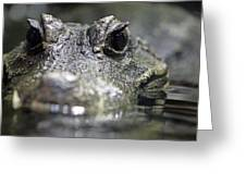 West African Dwarf Crocodile - Captive 03 Greeting Card
