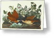 West Dove Greeting Card