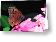 West Indian Buckeye Greeting Card