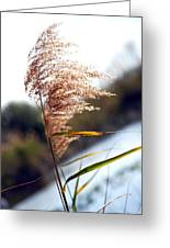 West Wind Today Greeting Card
