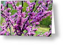 Westcreek Reservation 2 Greeting Card