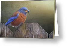 Western bluebird with virginia creeper berry digital art by r western bluebird with virginia creeper berry greeting card m4hsunfo