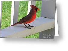 Western Cardinal Greeting Card