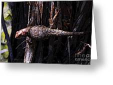 Western Fence Lizard Greeting Card