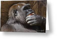 Western Gorilla, Gladys Porter Zoo, Brownsville, Texas Greeting Card