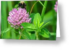 Western Honey Bee On Clover Flower Greeting Card