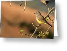 Western Kingbird Greeting Card