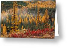 Western Larch Forest Autumn Greeting Card