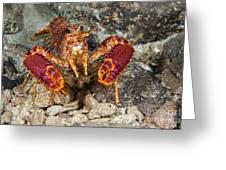 Western Lobster Greeting Card