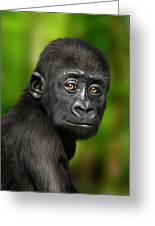 Western Lowland Gorilla Baby Greeting Card