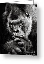 Western Lowland Gorilla Bw II Greeting Card