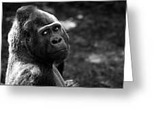 Western Lowland Gorilla Closeup Greeting Card
