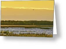 Western Marsh Harrier At Puurijarvi Greeting Card