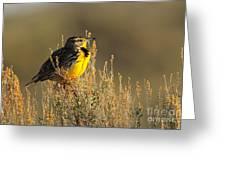 Western Meadowlark At Dawn Greeting Card