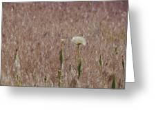 Western Salsify Seed Head Greeting Card