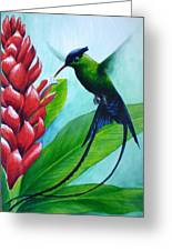 Western Streamertail Hummingbird Greeting Card
