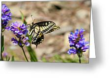 Western Tiger Swallowtail Greeting Card