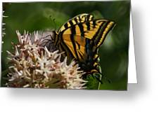Western Tiger Swallowtail Greeting Card