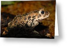 Western Toad Greeting Card