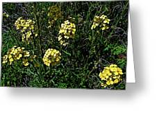 Western Wallflower Along Etiwanda Falls Trail In San Gabriel Mountains-california Greeting Card