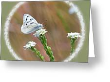 Western White Butterfly Greeting Card