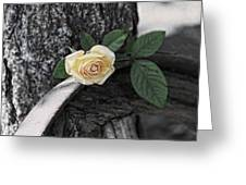 Western Yellow Rose Iv Greeting Card