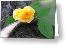 Western Yellow Rose Vi Greeting Card